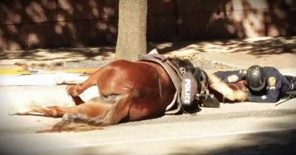 Powerful Photo Of An Officer Comforting A Dying Horse Goes Viral
