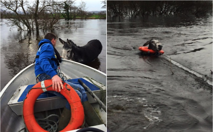 mj-godupdates-smiling-donkey-saved-from-flood-2