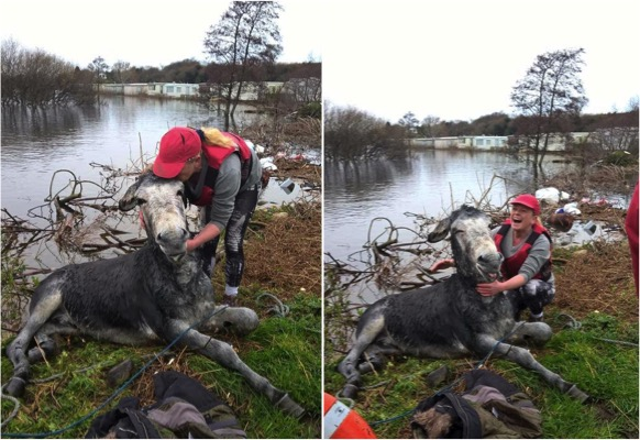 mj-godupdates-smiling-donkey-saved-from-flood-4