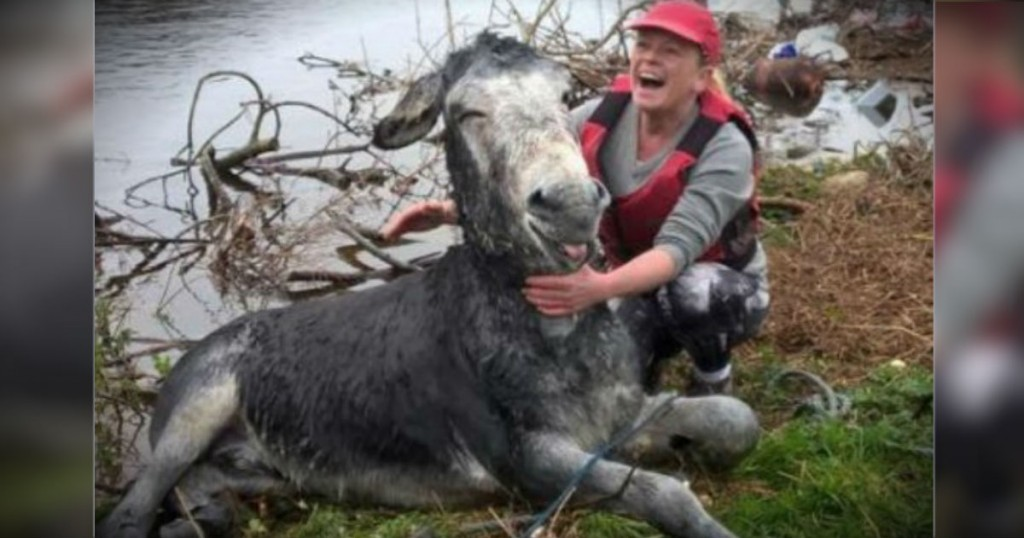 mj-godupdates-smiling-donkey-saved-from-flood-fb