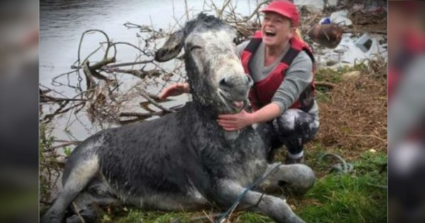 This Donkey Thanks His Brave Rescuers With A Grin