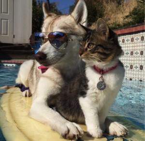 godupdates-abandoned-kitten-becomes-part-of-pack-of-huskies-12
