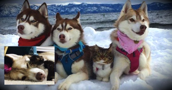 They Rescued An Abandoned Kitten, And Now She's Just One Of The Pack