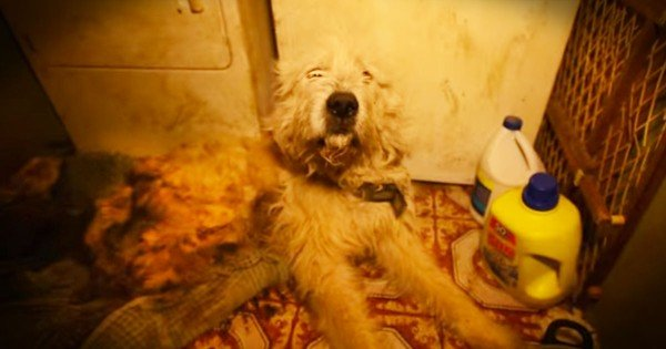 Puppy Mill Rescue Dog's Transformation Is Tearful