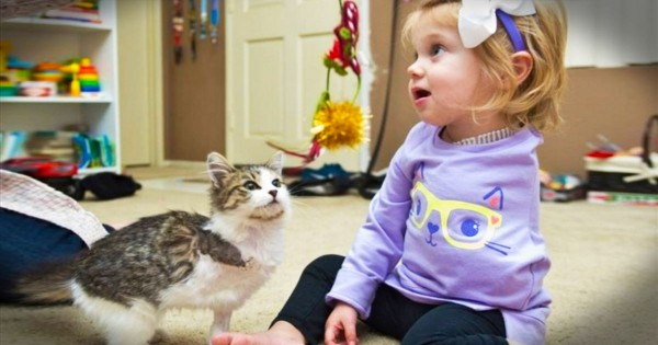 Little Girl And Her Kitty Who Is Just Like Her Will Melt Your Heart