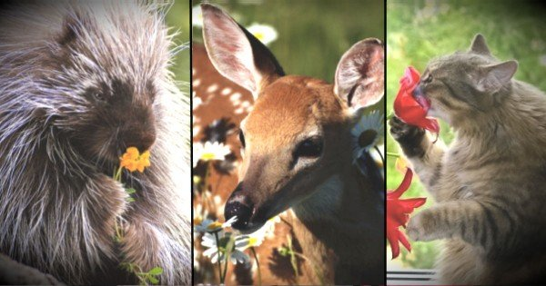 These 20 Animals Will Inspire You To Stop And Smell The Roses