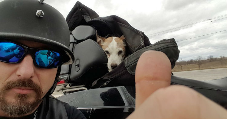 godupdates biker saves abused dog from the side of the road 4