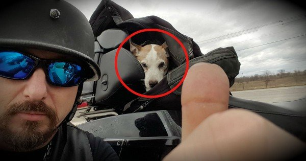 This Biker Is Our Hero After Coming To The Rescue Of His New Co-Pilot
