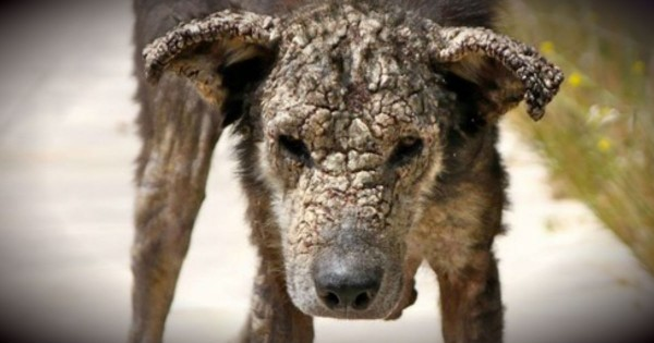 Stray Dog With A Face Of Stone Is Utterly Transformed By Love