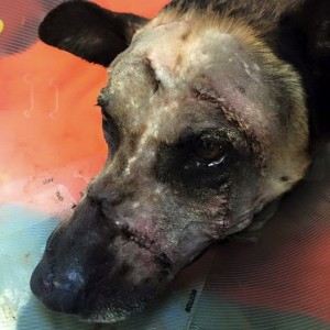 godupdates police dog attacked with machete 3