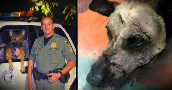 4-Legged Hero Protects His Partner From A Man With A Machete