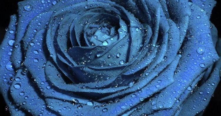 godupdates stranger calls her disabled son a blue rose 2