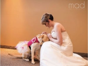 godupdates wedding photo bride and dog 1