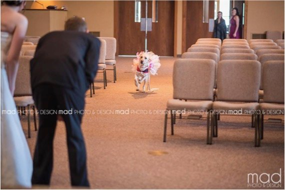 godupdates wedding photo bride and dog 2