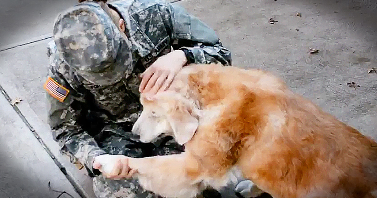 Popular Soldier Army Adorable Dog - godtube-military-woman-dog-welcomes-home  Snapshot_947152  .jpg