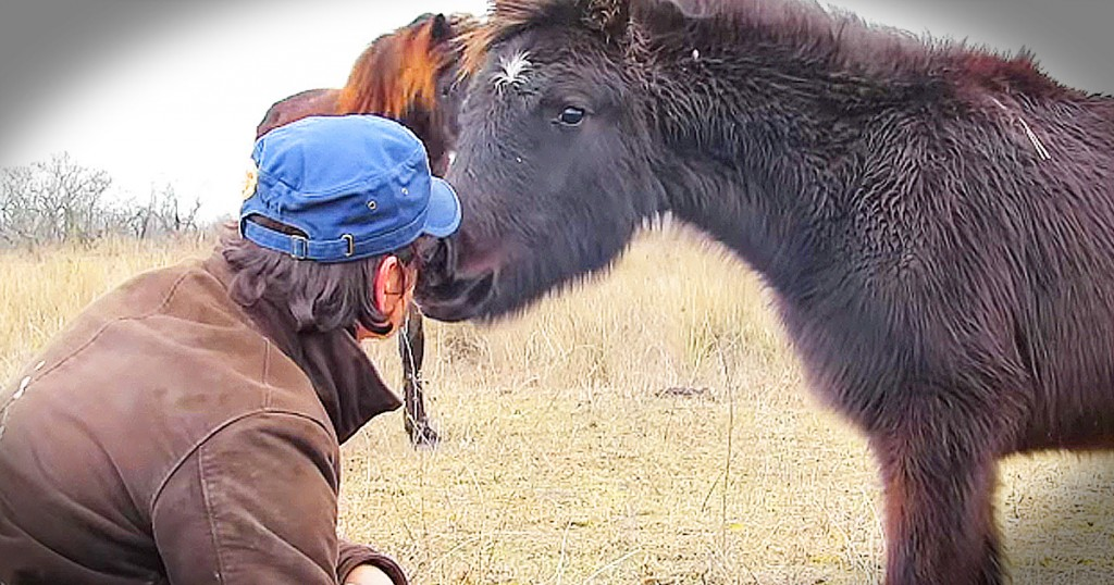 wild horse says thank you to rescuer kiss GodUpdates