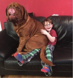 godupdates dog saves 5-year-old boy from blindness 2
