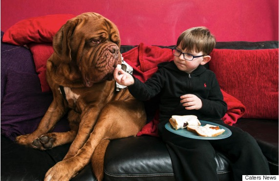 godupdates dog saves 5-year-old boy from blindness 4