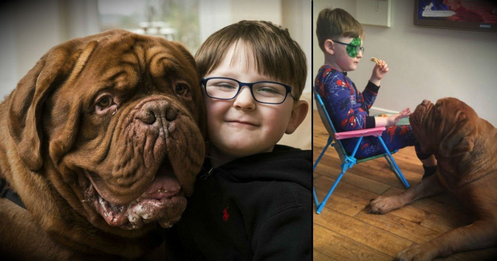 godupdates dog saves 5-year-old boy from blindness fb