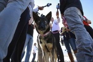 godupdates luna miracle dog survives being lost at sea 2