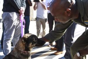 godupdates luna miracle dog survives being lost at sea 4