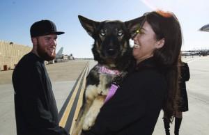 godupdates luna miracle dog survives being lost at sea 5