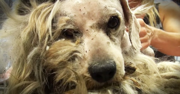 Hope For Paws Rescue And Transform Homeless Dog