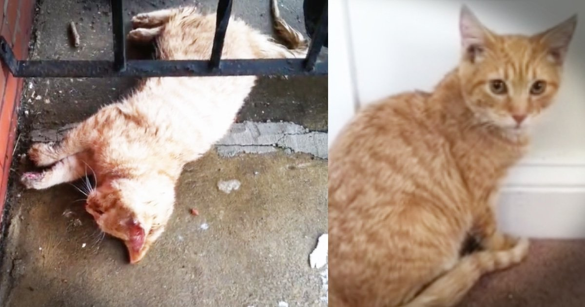 Cat Frozen To Front Porch Has Incredible Transformation
