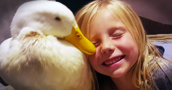 Little Girl And Her Duck Share a Beautiful Bond