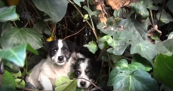 Puppies Get Rescued After Mother Disappears