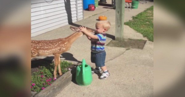Deer And Little Boy Share Magical Moment As They Play