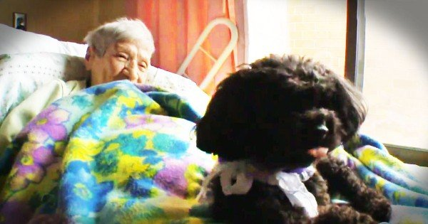 Abandoned Angel Dog Comforts The Ill In A Nursing Home