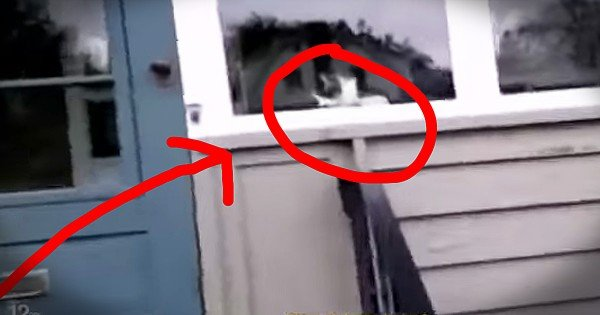 Mailman And Cat Battle Every Single Day Over Mail Slot