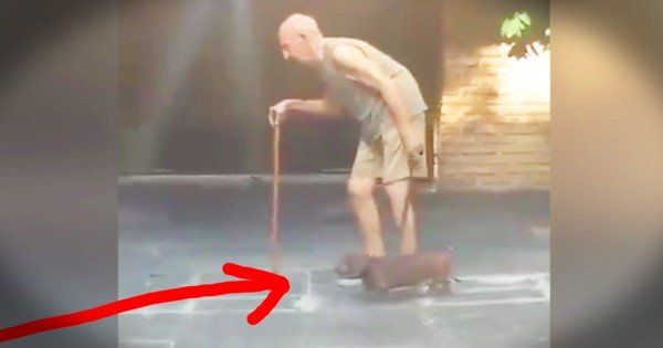 Loyal Dog Stays Along Side Slow Moving Elderly Owner