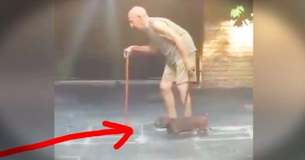 Loyal Dog Stays Along Side Slow Moving Elderly Owner