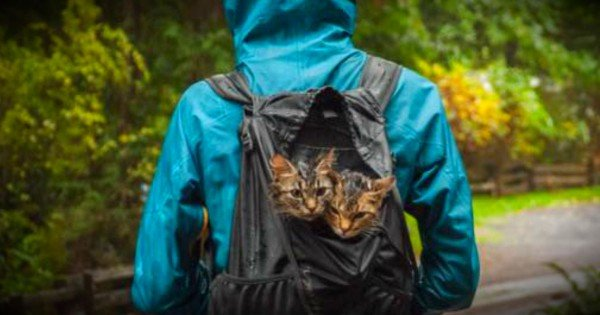 2 Abandoned Kittens Found In The Trash Now Live A Life Of Adventure