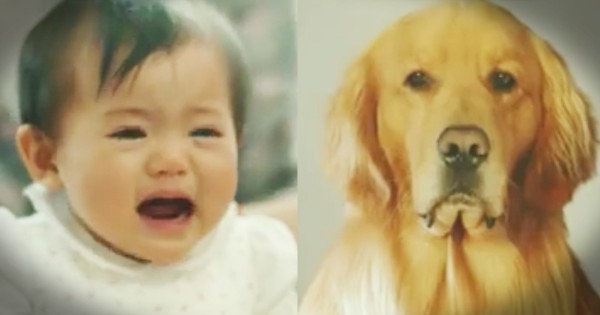 Dog Dresses Like Lion to Make Baby Like Him Amazon Ad