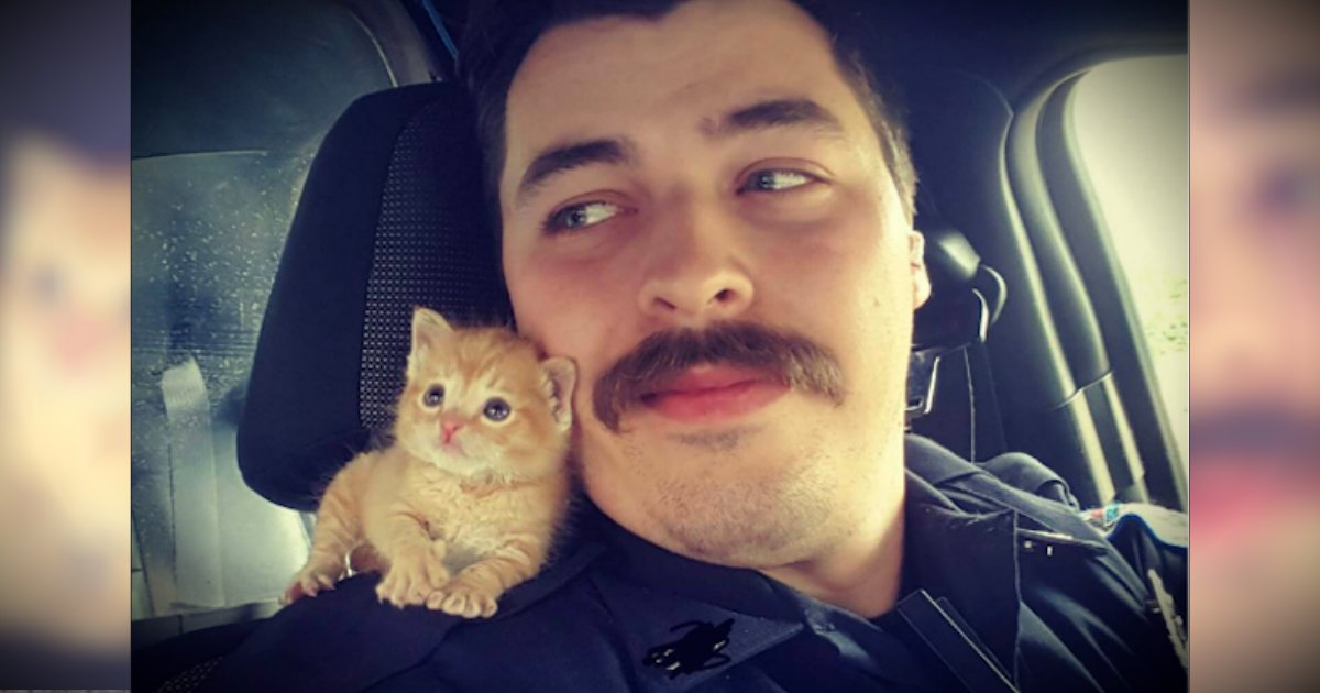 godupdates abandoned kitten rescued by cop with mustache fb