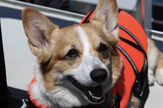 godupdates corgi cruise memorial day 11