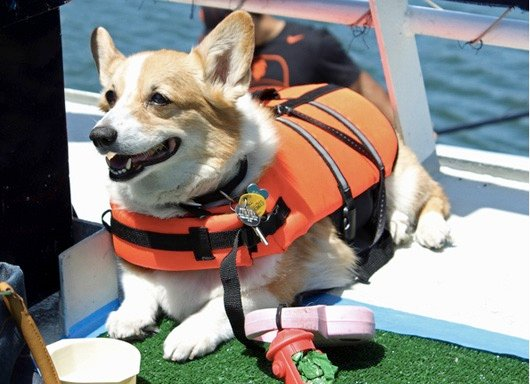 godupdates corgi cruise memorial day 12
