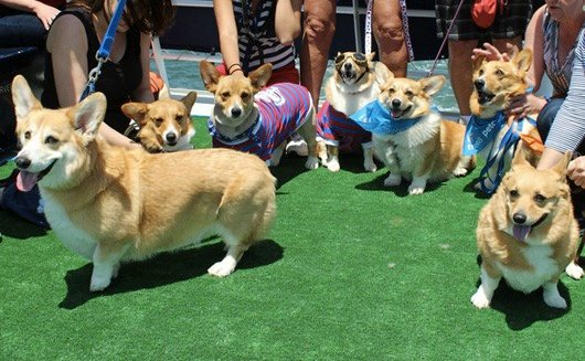 godupdates corgi cruise memorial day 13