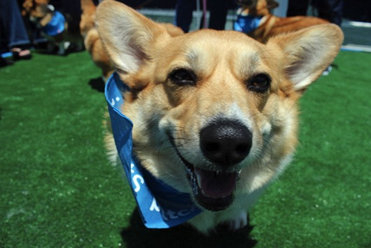 godupdates corgi cruise memorial day 15