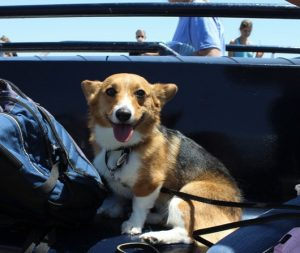 godupdates corgi cruise memorial day 17