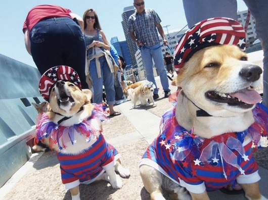 godupdates corgi cruise memorial day 2