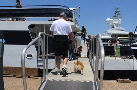 godupdates corgi cruise memorial day 5