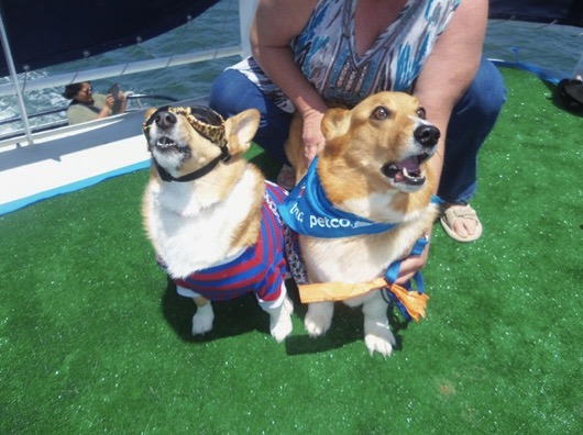 godupdates corgi cruise memorial day 7