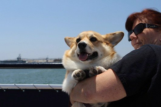 godupdates corgi cruise memorial day 8