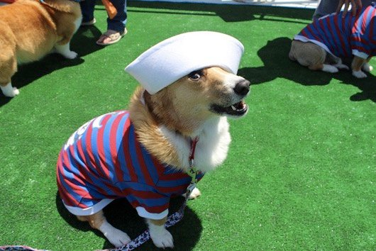 godupdates corgi cruise memorial day 9