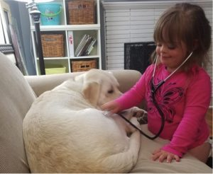 godupdates diabetic alert dog hero saves little girl sadie 1