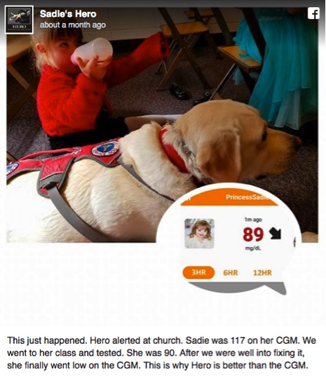 godupdates diabetic alert dog hero saves little girl sadie 2